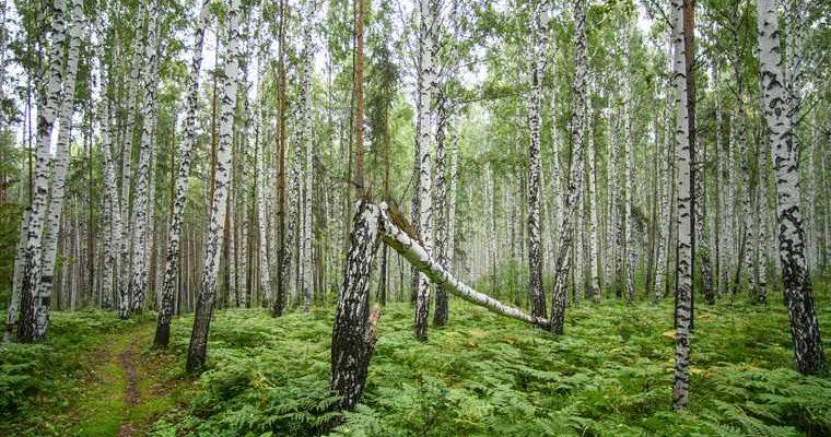 Парки и скверы Екатеринбурга застройка лес