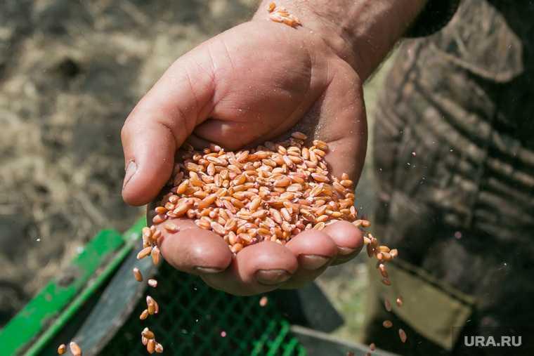 урожай Курганская область