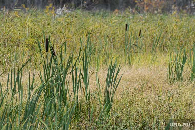 Добрянки грибник тонул в болоте