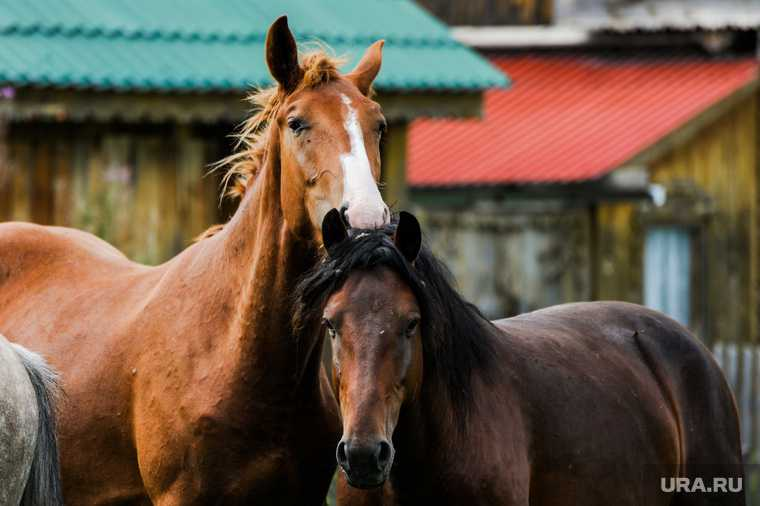 лошади в златоусте