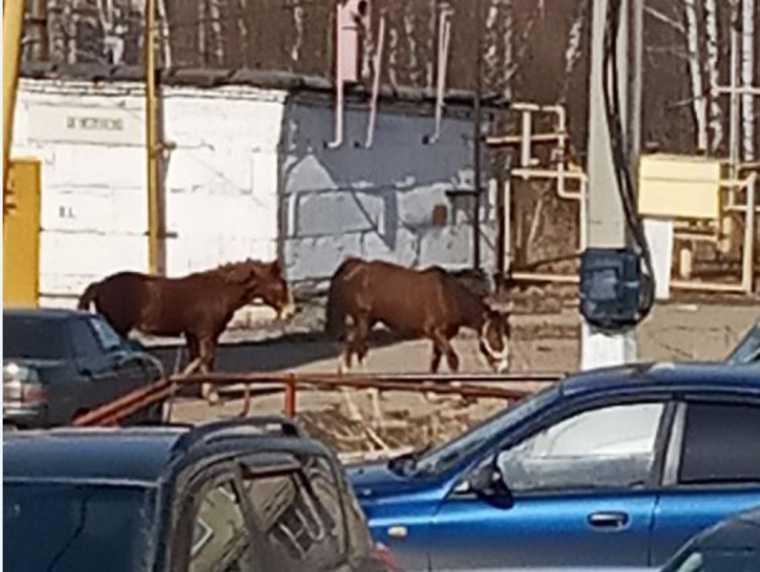 В Златоусте лошадь покусала женщину