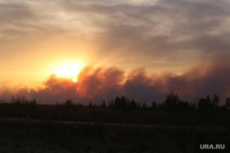 лесные пожары Курган