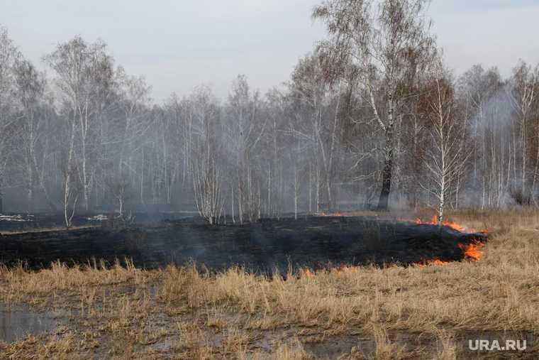 новости хмао лесные пожары власти не готовы нарушения в работе не смогут потушить возгорание