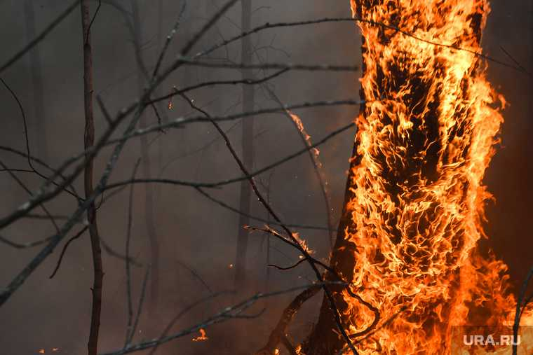 новости хмао высокий риск возникновения лесных пожаров в югре горят леса в кондинском районе пожары в Березовском районе