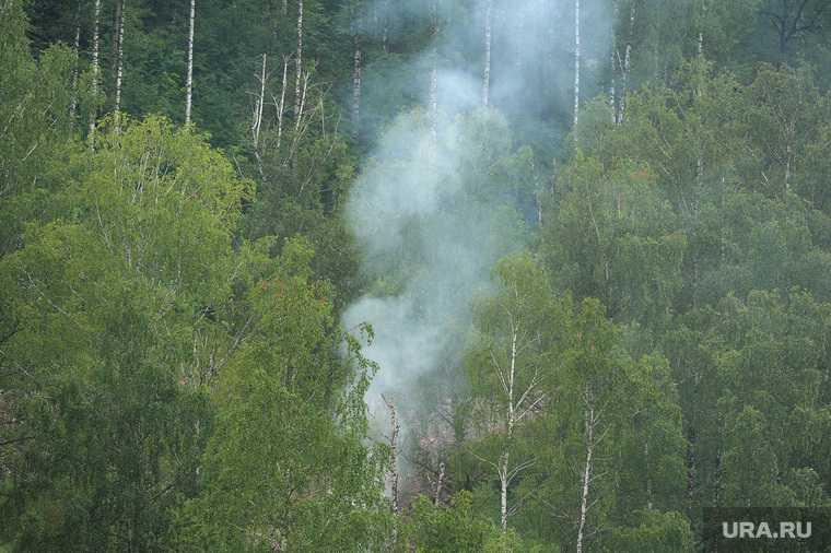 новости хмао горит лес увеличилась площадь лесных пожаров в югре природные пожары накрыли лес ущерб югорским лесам природе