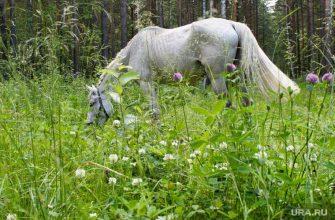 на девушку напали лошади